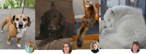Screenshot images of four dogs of Promet Source team members